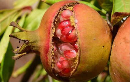 Гранат фрукт полезные ÑвойÑтва_Ð´Ð»Ñ Ð¼ÑƒÐ¶Ñ‡Ð¸Ð½