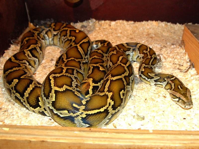 Эта девушка обожала спать с питоном, но змея вдруг стала худеть... Узнав, в чём дело, я содрогнулся!