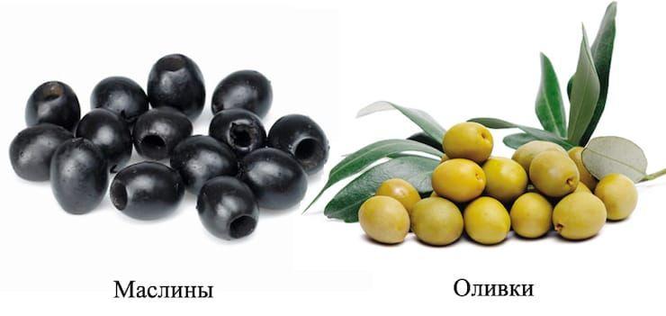 Чем отличаются оливки от маслин и что полезнее? оливки, маслины, плоды, плодов, оливок, являются, оливкового, полезнее, масла, оливковое, плодах, черные, масло, продукт, более, оливках, имеют, может, консервации, полезные