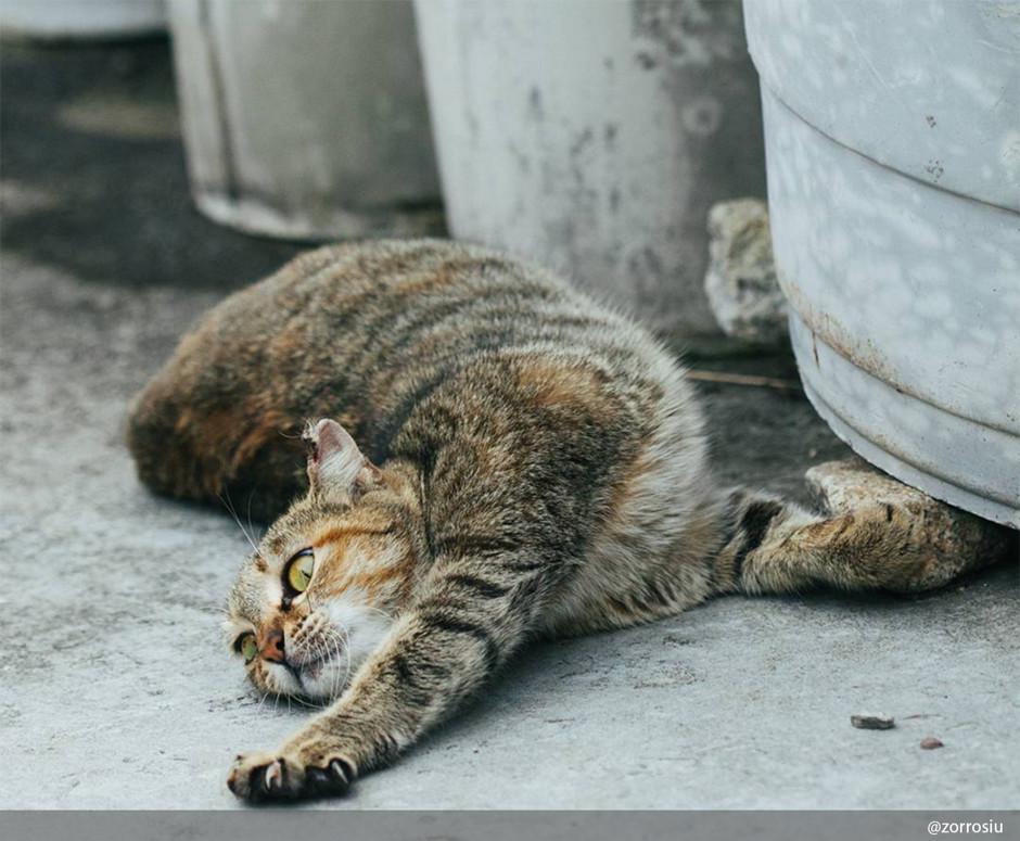 10 фактов о кошках, которых вы, скорее всего, не знали домашние животные,интересное