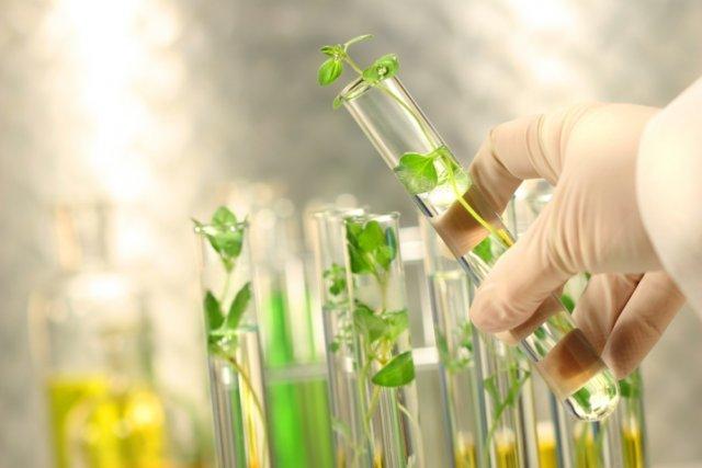 Регуляторы роста и развития: как не запутаться в многообразии препаратов