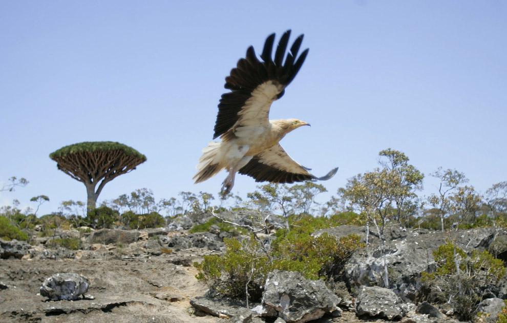 Прогулка по острову Сокотра