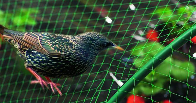 Сетка от птиц – что это такое, помогает ли она, как выглядит сетка, описание разных вариантов дача,полезные советы,сад и огород,сетка от птиц