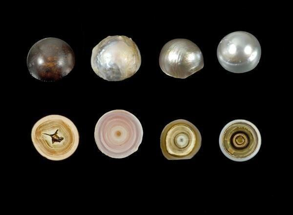 6. Изнутри жемчужины так же круты, как снаружи вещи, внутри, изнутри, подборка, разрез, фото