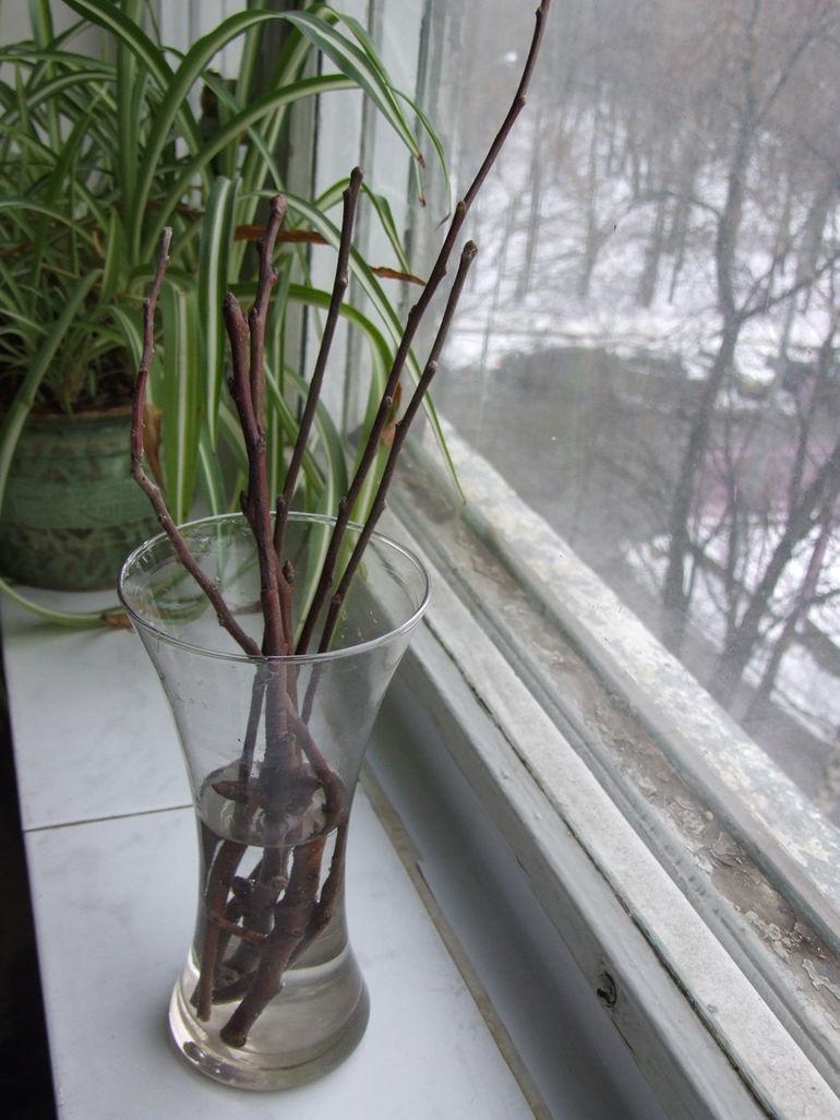 Как перезимовали? Проверяем состояние сада дерево, веточки, участка, весной, срезы, значит, температуры, поставьте, минусовые, определить, тепле, феврале, секатором, сильно, пострадало, деревья, обязательно, конце, морозы, микроклимат
