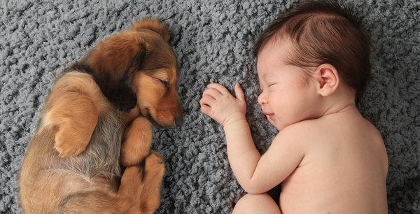 Эти фото подтверждают, что животные – лучшие компаньоны по совместному сну