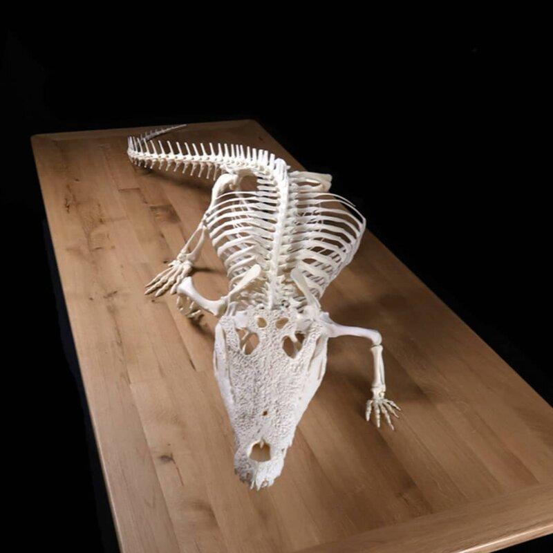 Скелет крокодила выглядит так, как мы все и предполагали
