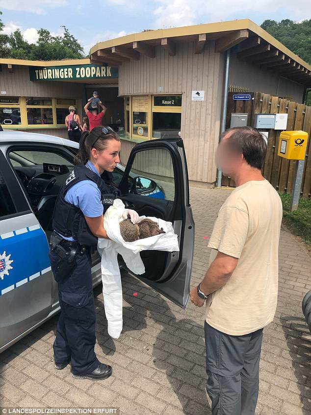 Пьющий еж — горе в семье: в Германии двух ежиков спасли от похмелья Истории из жизни,приколы,Смешные животные