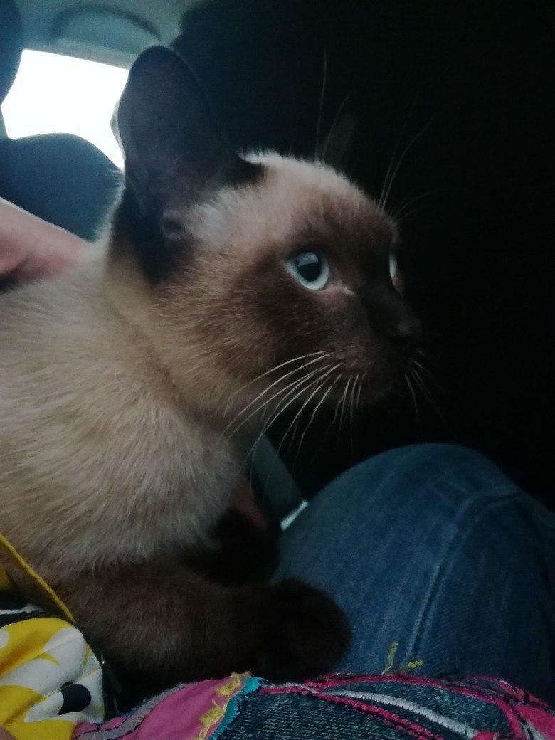 Наш котомальчишка