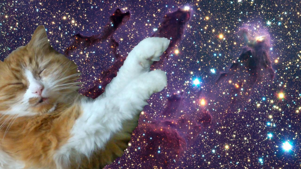 потребовалось картинки на рабочий стол коты в космосе помощью