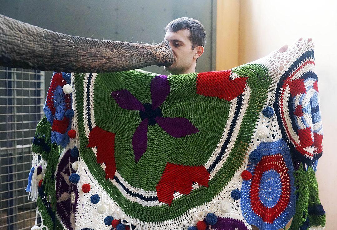В Геленджике слонихе Чани подарили шаль, связанную из пяти километров пряжи