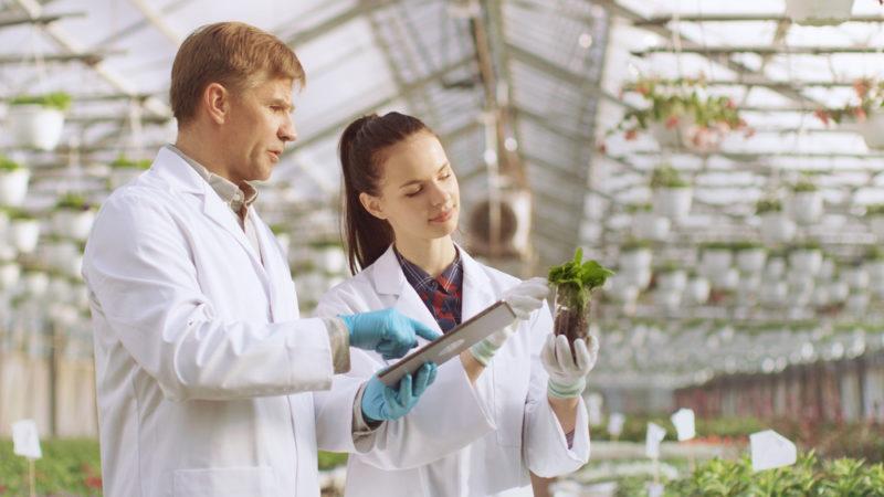 Эко, органик, био: что означает маркировка на органических продуктах. Изображение номер 5