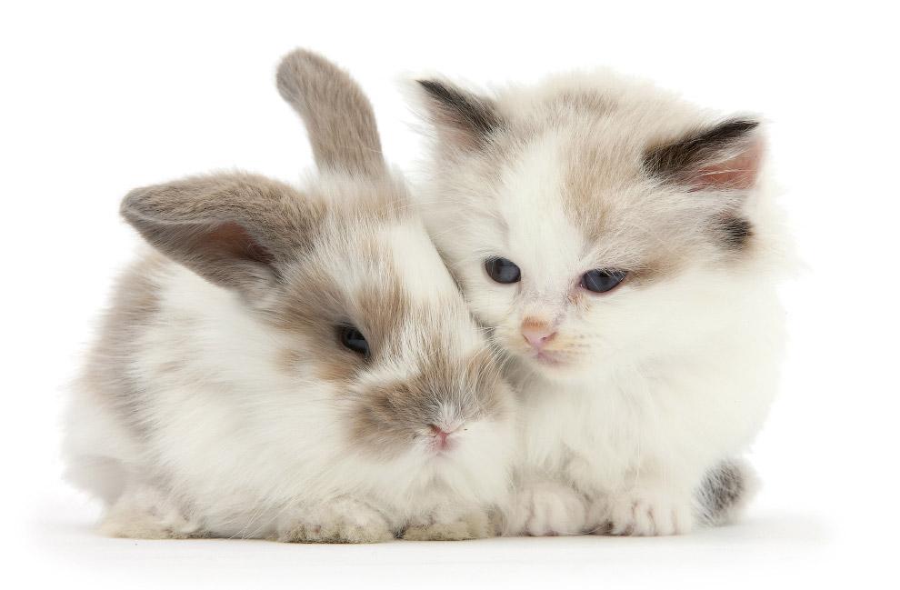 Есть ли одинаковые кошки и кролики?
