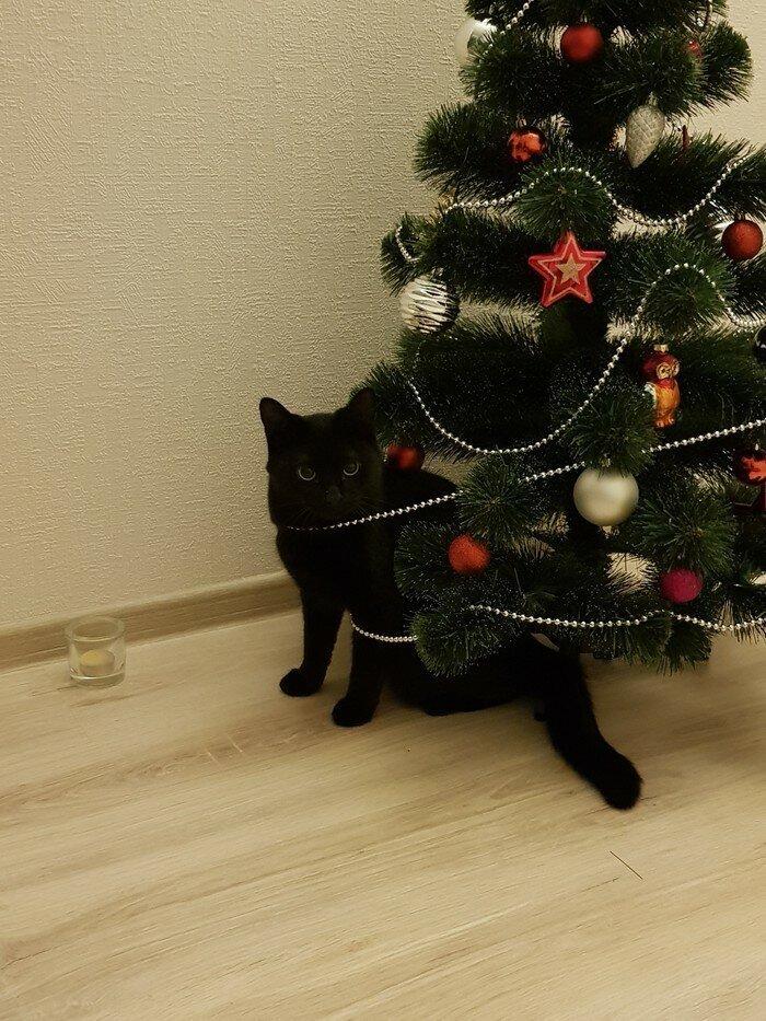 И вот она нарядная на праздник к нам пришла елка, игрушки, кот, новый год, разбой