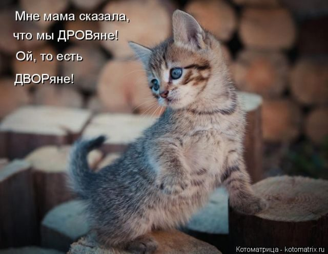 Забавные котоматрицы))