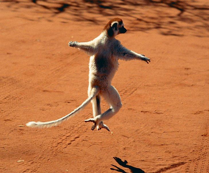 Танцующие животные
