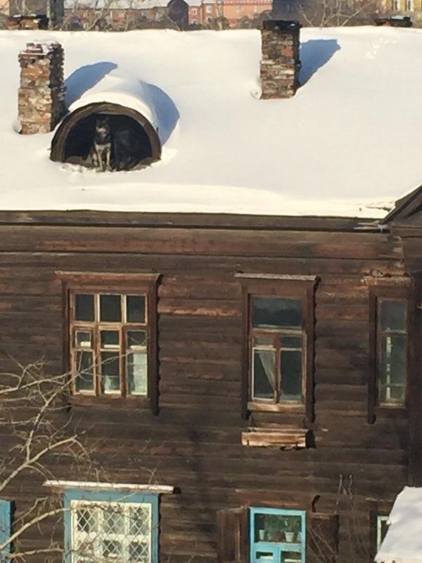На крыше дома... Подборка о кровле много, Почти, происходит, крышах, людейКажется, Иногда, весёлого, крыше, кровляНа, качественная, точно, черепицыУпрлсяУ, слишком, РостовеКогда, замышляютОднажды, чтото, насыщеннее, большинства, жизнь, крышеУ