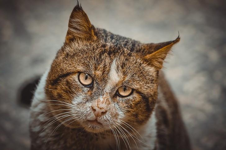 """""""молодая кошка ходит на улице и, наверное, она голодна"""""""
