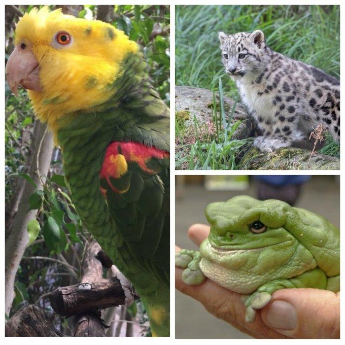 Зоопарки написали шутливые о…