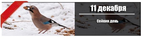 11 декабря: Сойкин день.