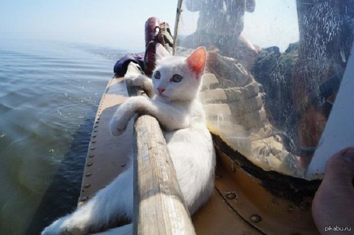 Мечтаете совершить морское путешествие, прогулочный катер «Переправы» поможет вам сделать это с максимальным комфортом.