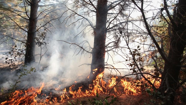 Пожарные устранили угрозу перехода пожара на поселок в Карелии Происшествия