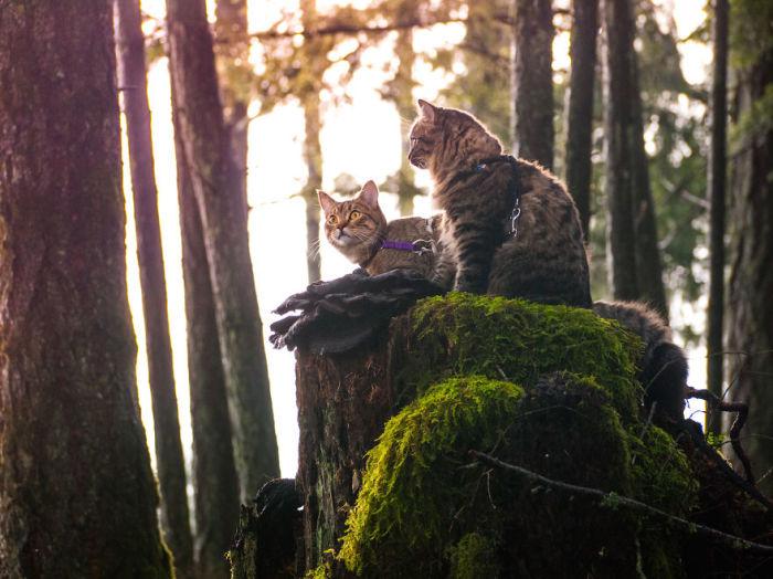 Совместный отдых на природе.