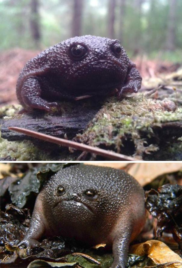 6. Хватит с него этой жабьей жизни! животные, злость, милота