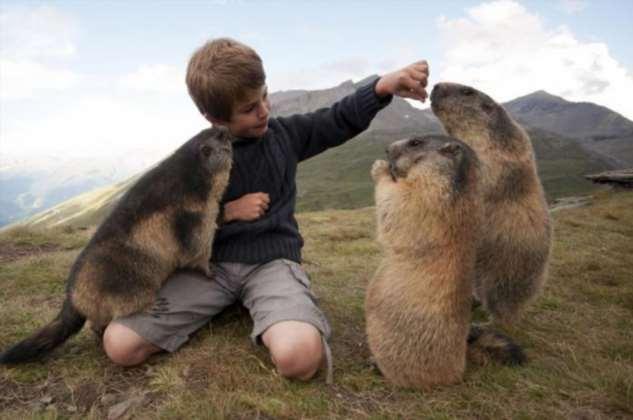Истории животных, сохранивших жизни людям животные,истории