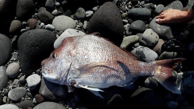 Сёрфер голыми руками поймал рыбу-мечту Сёрфер, в мире, голыми руками, люди, мечта, рыба