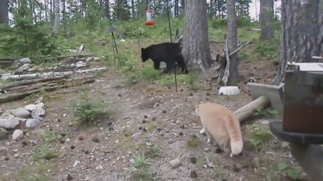 Едешь на охоту, бери с собой кота