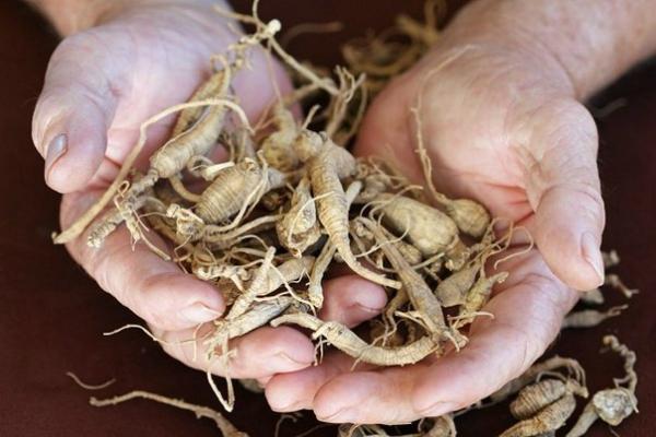 Эти растения проникают в суставы и восстанавливают хрящи в 1000 раз лучше химии