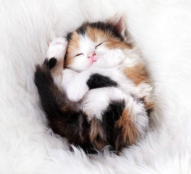 мамаши мимимишные котята картинки всём