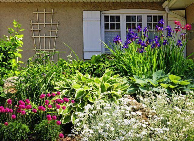 Как красиво разместить хосты на участке ландшафтный дизайн,цветы