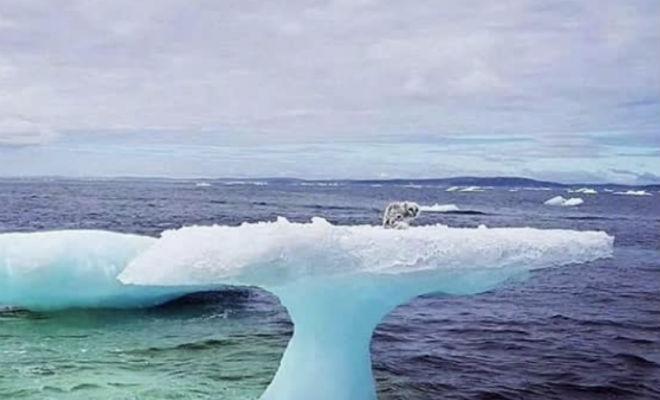 Рыбаки подплыли к льдине и обнаружили странное животное Культура