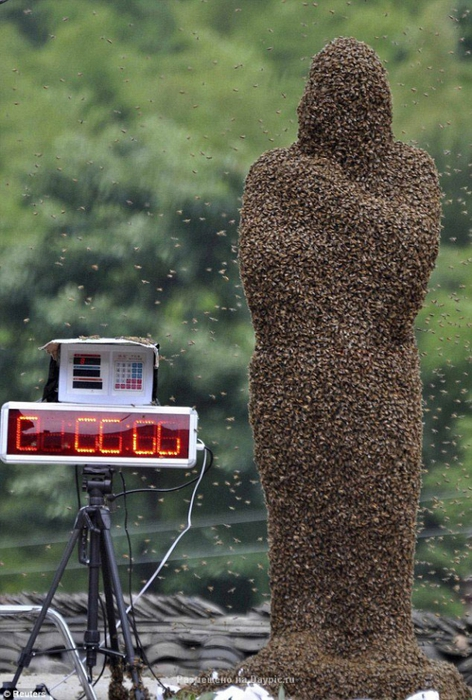 Усмиритель пчел Ванг Далин (9 фото)