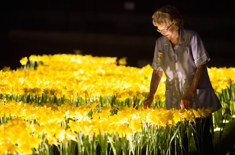Несущим свет в тёмные времена: инсталляция из нарциссов, посвящённая работницам хосписов
