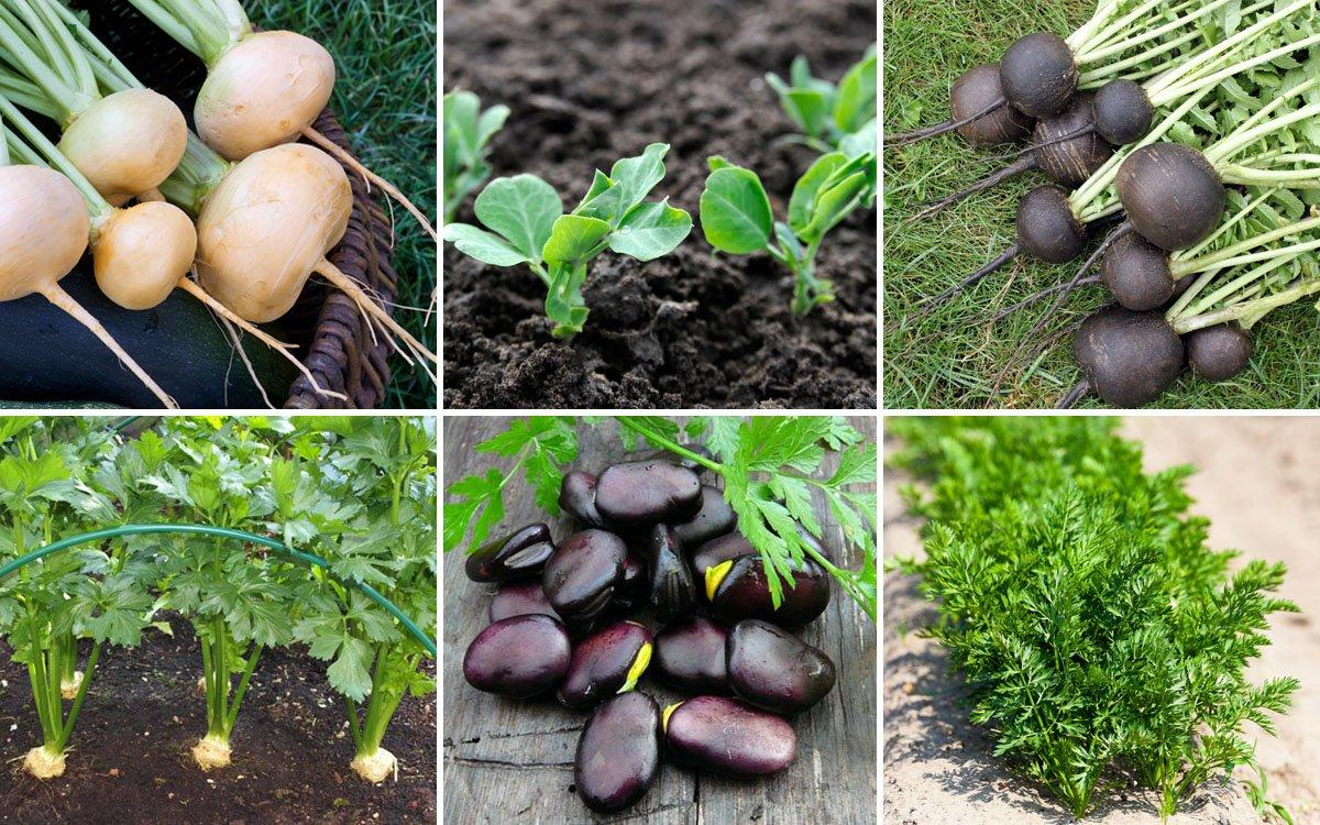 Что можно посеять и посадить в огороде осенью