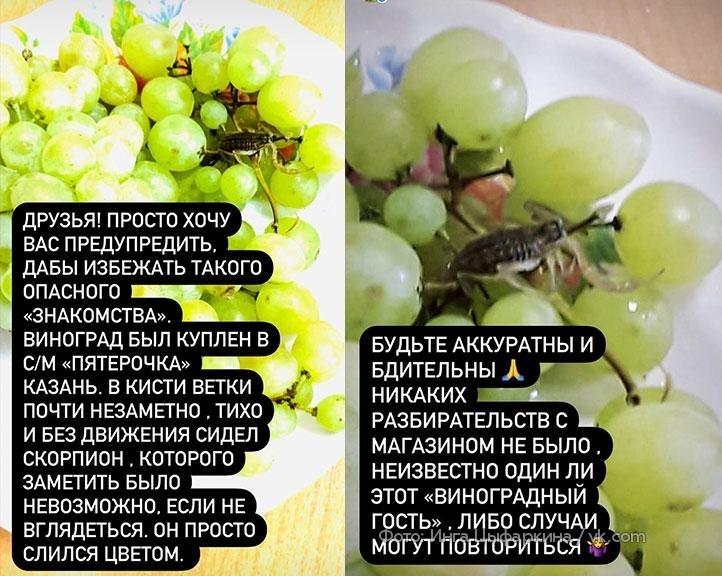 ВКазани скорпион выполз измагазинного винограда иужалил женщину Россия,ужас,шок