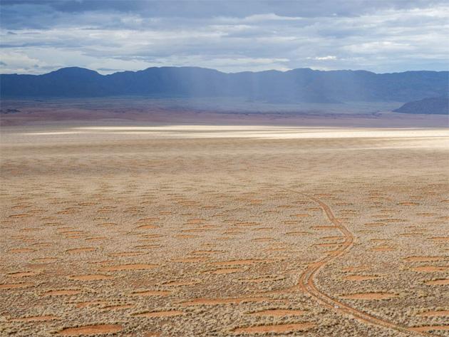 Ведьмины кольца: как появляются круги в пустыне Намиб Пространство