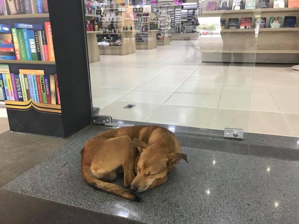 Бездомный пёс лежал у книжного магазина… А потом зашел внутрь и изменил свою жизнь