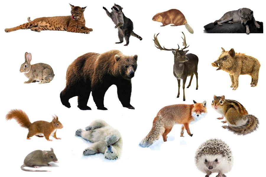 Открытка, картинка с надписью млекопитающие