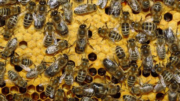 5 фактов о пчелах, которые изменят ваше представление о них Факты, Пчелы, Интересное, Длиннопост