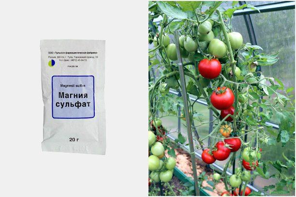 12 садовых удобрений, которые не обязательно покупать