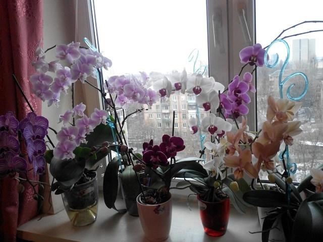 Почему нельзя держать орхидею дома домашние растения