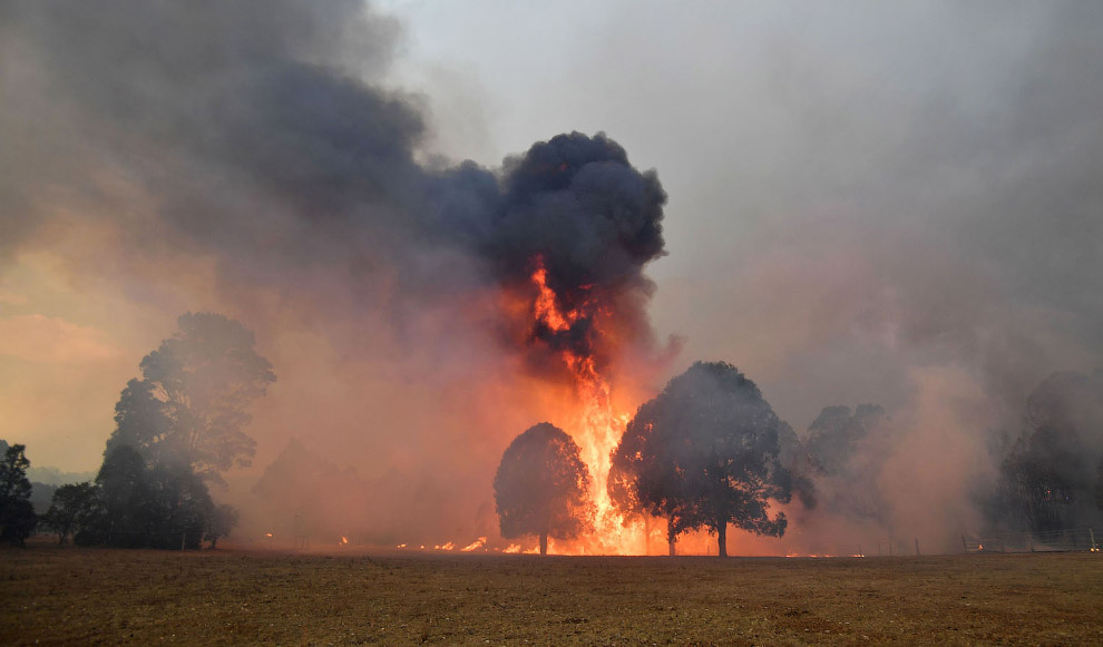 В Австралии бушуют лесные пожары Путешествия,фото
