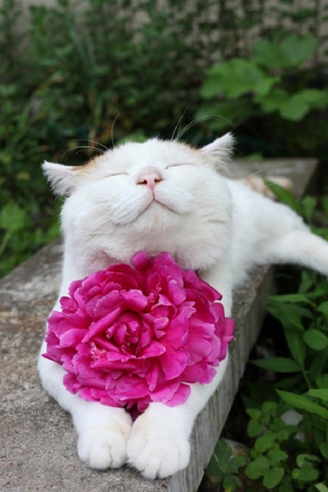 прикольные картинки дарю цветы поселение