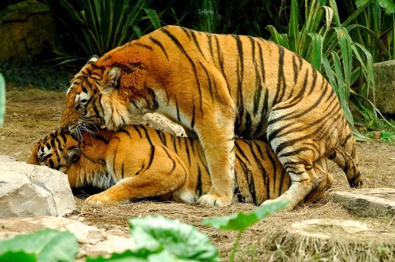 Удивительные факты о сексе в мире животных животные,интересное,мир животных,природа,секс