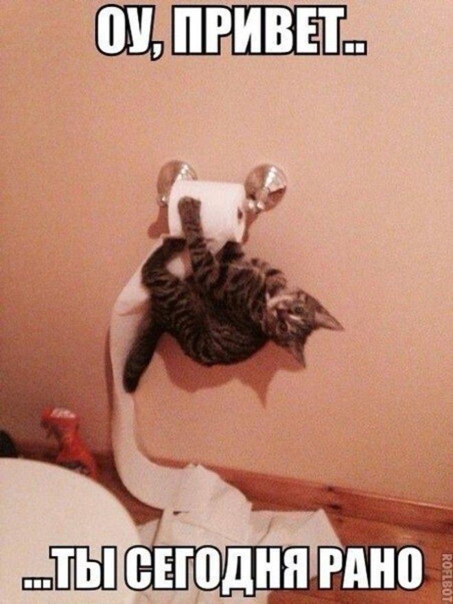 Подборка фото забавных котов…