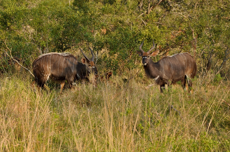 Есть интересная страна — Свазиленд заграница,путешествие,страны,туризм
